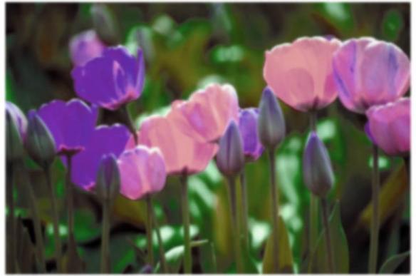 Moscarillos Garden Shoppe donates $50
